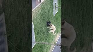 Собака ебёт пустату