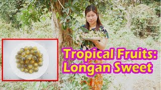Yummy Awesome Tropical Fruit - Longan​ Sweet Recipe – Cooking with Lakena