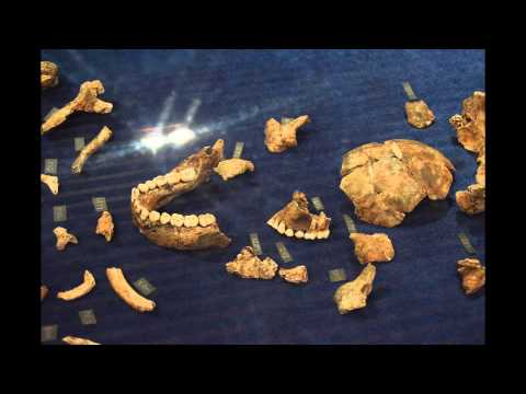 Homo Naledi at Maropeng exhibition limited time only