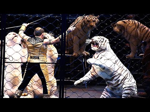 10 Reasons To Avoid The Circus And Visit Big Cat Rescue