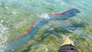 GIANT OARFISH FILMED IN MEXICO
