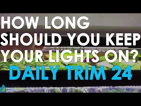 HOW LONG SHOULD YOU KEEP YOUR LIGHTS ON? | DAILY TRIM 24
