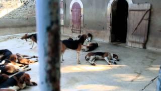 シュヴェルニー城の犬舎には約100匹の犬が飼われてる。。。。 http://bl...