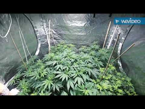 Growing with tap water? In hydroponics Coco