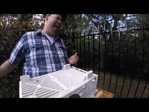 Beekeeping FAIL - Bee Installation Goes Wrong