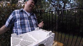 Beekeeping FAIL - Bee Installation Goes Wrong