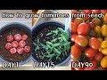 공짜로 대추방울토마토 모종 얻는 방법!!ㅣHow to grow tomatoes from seeds