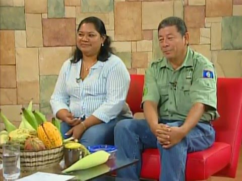 Ya'axche Conservation Trust on Agroforestry Concession in Maya Mountain Forest Reserve