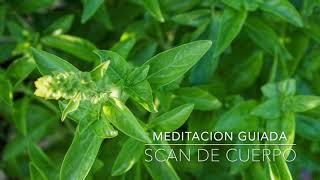 SCAN DE CUERPO: Meditacion Guiada de 15 Minutos | A.G.A.P.E. Wellness