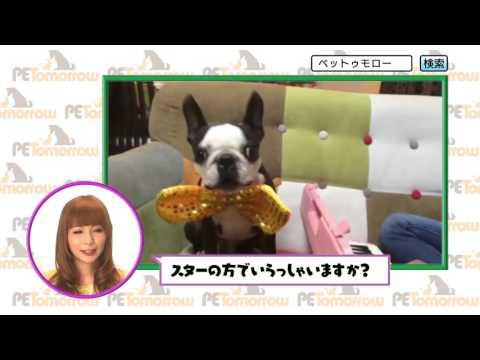 中川翔子 ペットゥモロー CM スチル画像。CM動画を再生できます。