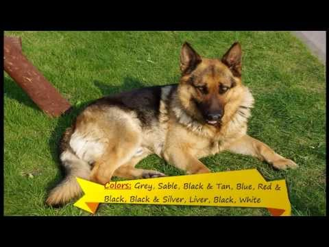 top-10-smart-and-intelligent-dogs-in-the-world