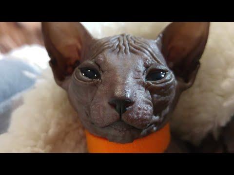 Bald & Beautiful sphynx kittens, so cute video / DonSphynx /