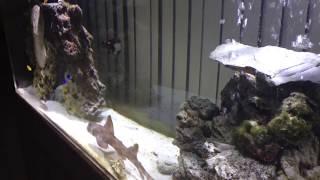 Video My shark in a 220 gallon tank download MP3, 3GP, MP4, WEBM, AVI, FLV Oktober 2018