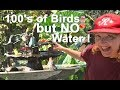 1000's of Birds Drink & Bath Daily In Our Gardens Water Fountains MAINTENANCE Solar Powered Panels