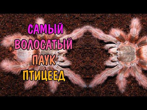 Вопрос: Что за светлые пауки на винограде (см.фото)?