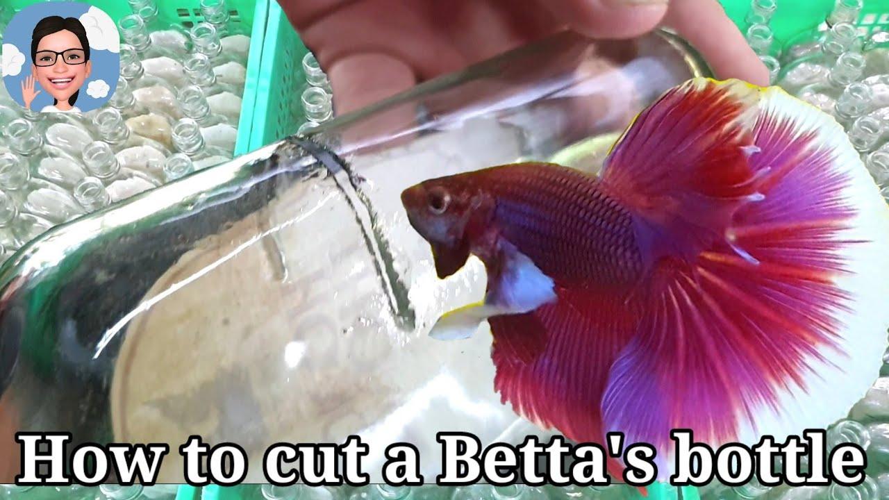 ขวดใส่ปลากัด..เค้าตัดอย่างไรกันนะ#ป้าตุ้ยยูทูป