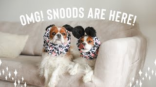 SNOODS ARE HERE! Keep your dog's ears clean during meals!