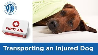 Transporting an Injured Dog - Vet Tips with Dr. Klein