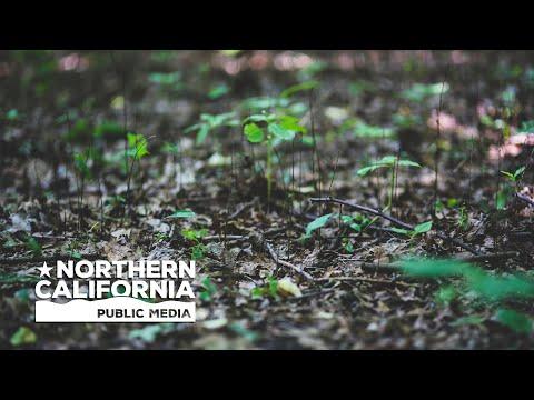 North Bay Bountiful: Groundwater