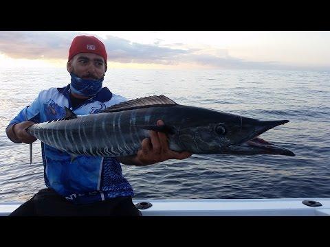 gold coast offshore, wooli fishing new era angler