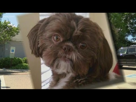 The Eddie Foxx Show - Healthy Dog Euthanized to Be Buried With Owner