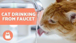 Why is My CAT DRINKING TAP WATER? 🚰🐈 Find out!