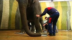 TELE TOP: Wie schwer ist eigentlich ein Elefant?
