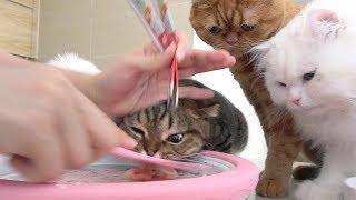 철판 아이스크림에 고양이들이 난리가 났어요