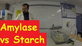 Action of Amylase on Starch