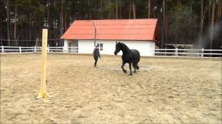 Самое умное животное -лошадь фризской породы. Интересное видео с лошадьми