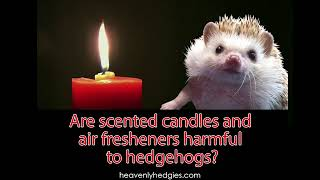 Valentines candle with a pair of hedgehogs
