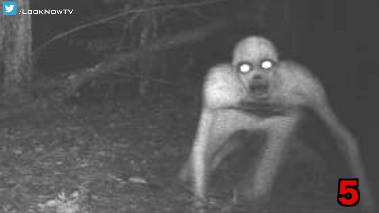 10 Creepy & Unexplained Trail Camera Photos! - YouTube Creepy Pictures