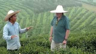 Talking Tea - From the ground up - 1 of 5 Tea plantation Golden Triangle Northern Thailand