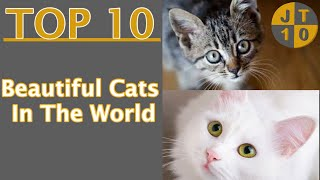 Top 10 most Beautiful Cats in the World   Cat Breeds   International Cat Day