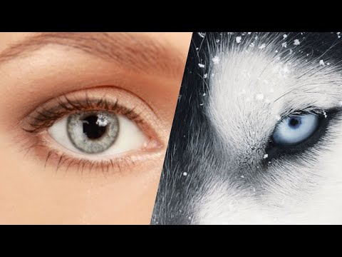 QUIZ: What Animal's Eyesight Do You Have (PART 2)