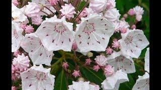Beautiful Winter Flower Farming - Best plants for winter garden