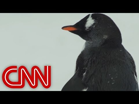 CNN Follows Greenpeace On Dramatic Mission To Save Antarctica
