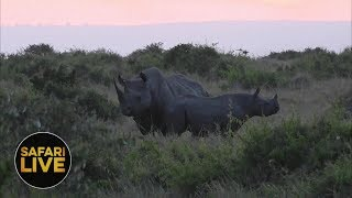 safariLIVE - Sunset Safari - November 16, 2018