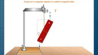 Torque on a Magnetic Dipole