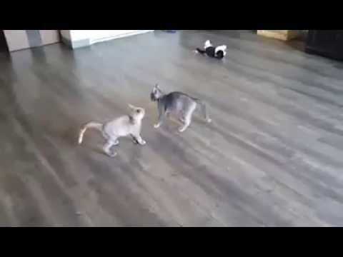 Emee & Debi-Dee (DD) - Kitty Devore Rescue