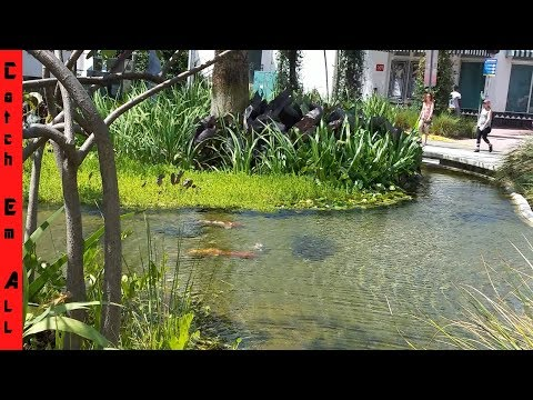 CITY FISHING!!! WEIRD FISH In Urban Locations