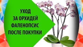 Смотреть видео орхидея фаленопсис уход после