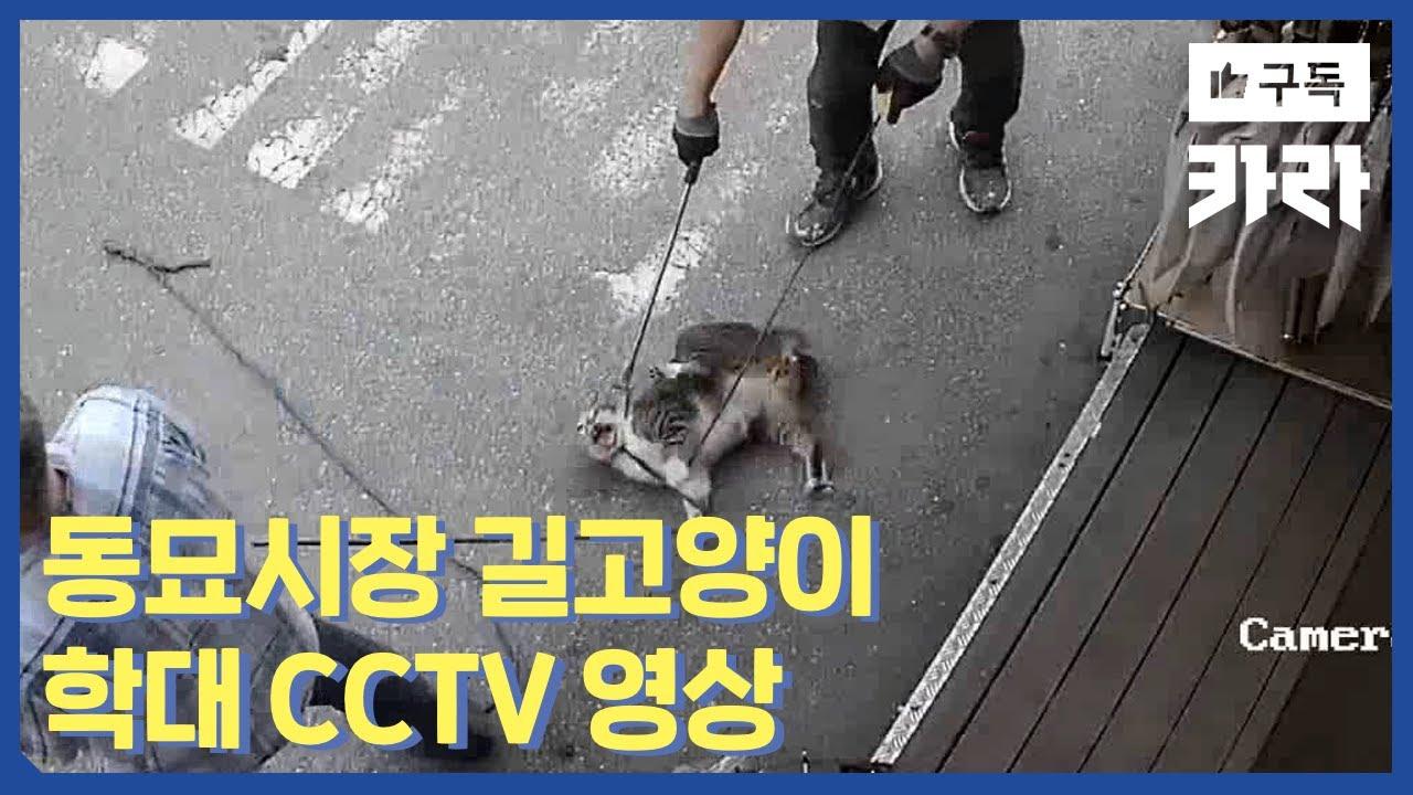 동묘시장 길고양이 학대사건 CCTV 영상