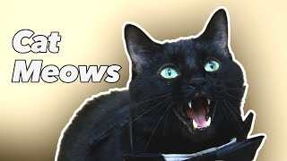 Cat Meows -  N2's Real Voice - Cat Meowing Video
