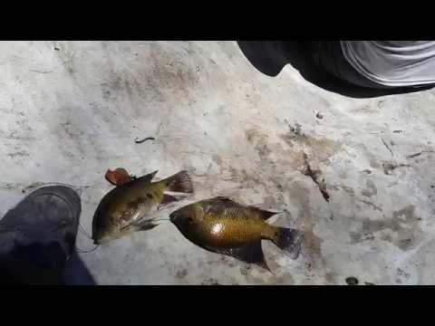 Sol y ludmi pescando mojarras doovi for Como criar mojarras