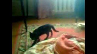Кошка хочет поиграть