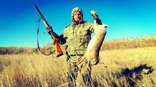 Охота на зайца. Охота на серую куропатку.