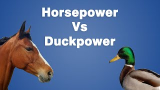 Can We Use Duckpower Instead of Horsepower?