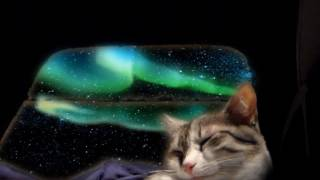 Musique et sons pour relaxer votre chat