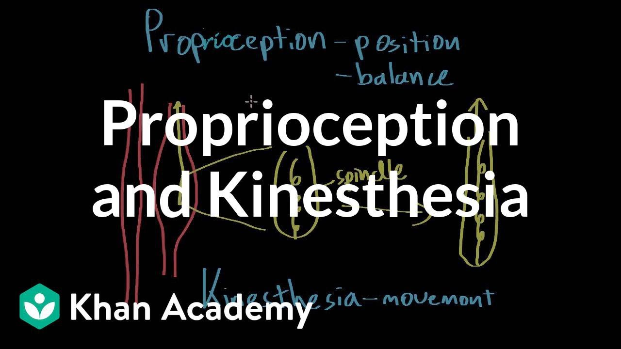 Proprioception and kinesthesia (video) | Khan Academy